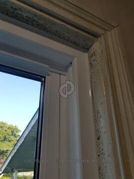 Bee Window Window Installation