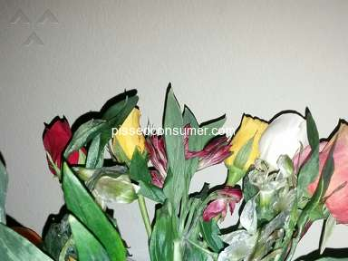 ProFlowers Smiles And Sunshine Arrangement review 290576