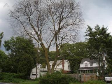 Penn Jersey Tree Service Landscaping and Gardening review 4655