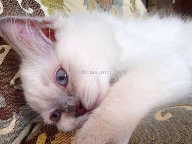 Ragdolls Totally Terrific - Review in Pet Stores category from Columbia, Maryland