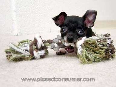 Petsmart Purina One Dog Food review 387678
