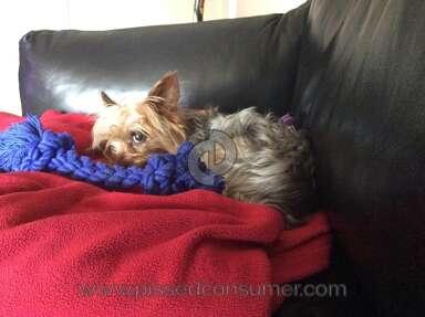 Petsmart Grooming Service review 44161