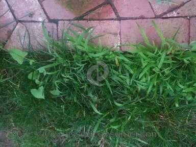 Trugreen Lawn Fertilization Service review 117977
