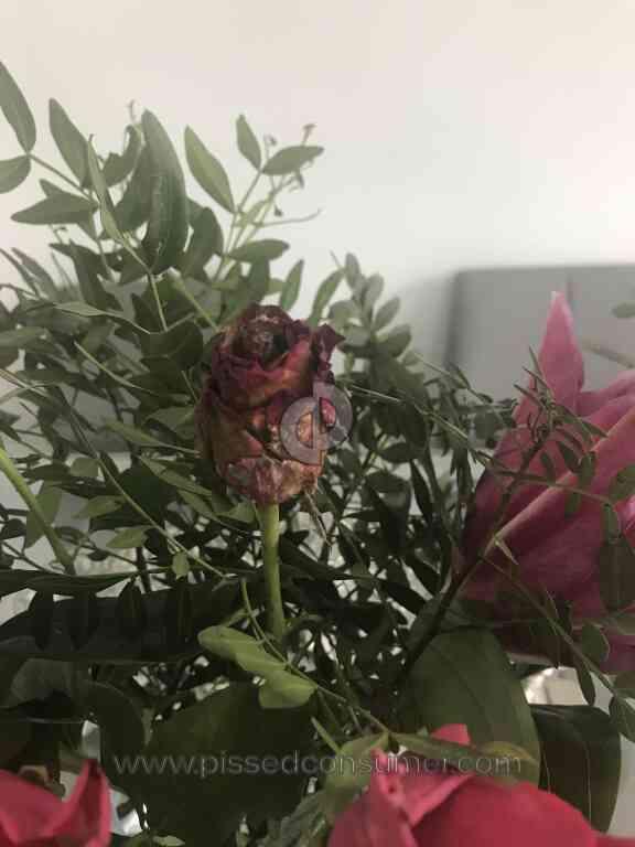 Prestige Flowers Dead Rose Covered In Mildew In Bouquet Jun 02