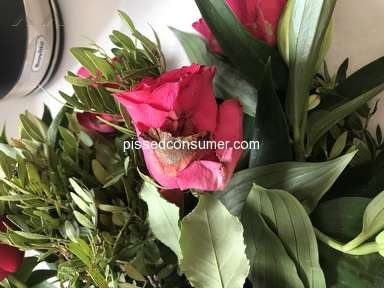 Prestige Flowers Roses Flowers review 311992