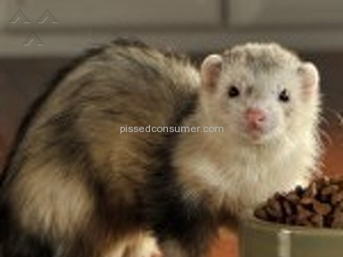 Petland - Inadequate transport accommodations upon purchase of ferret