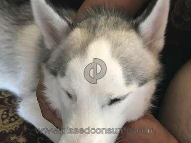 Vetco Clinics Pet Medical Service review 218634