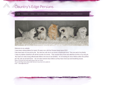 Countrys Edge Persians Persian Cat review 272780