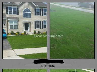 Trugreen Lawn Service review 159952