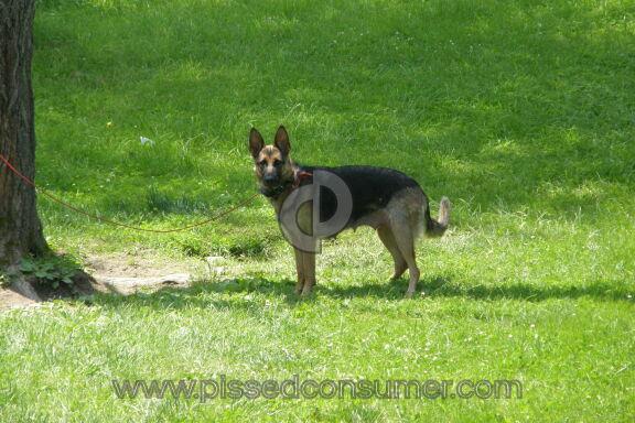 Berg Quella Kennel German Shepherd Dog