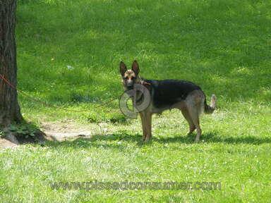 Berg Quella Kennel German Shepherd Dog review 195554