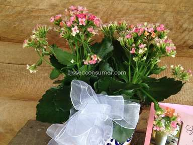 Avasflowers Plant review 135861
