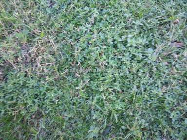 Trugreen Lawn Service review 50365