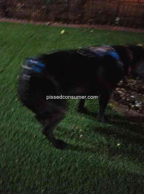 138 Vca Animal Hospital Pet Medical Service Reviews and
