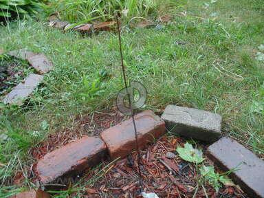 The Usa Nursery Dwarf Apple Tree review 220976