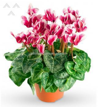 Avasflowers Plant