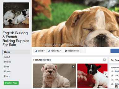 Adorablebulldogs - Puppy Scammed: $1500 for Blue French Bulldog -no puppy no refund