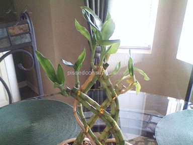 Wesley Berry Flowers Plant review 63955