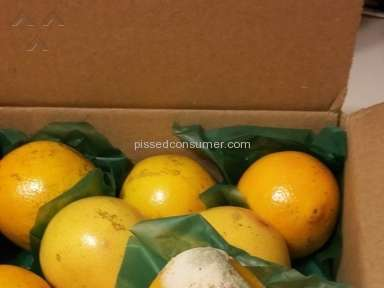 Palm Beach Groves Delivery review 103939