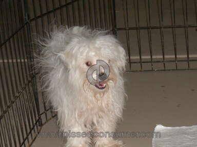 Puppyfind Animal Services review 58493