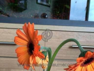 Prestige Flowers Flowers / Florist review 336044