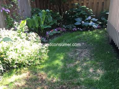 TruGreen Lawn Service review 306006