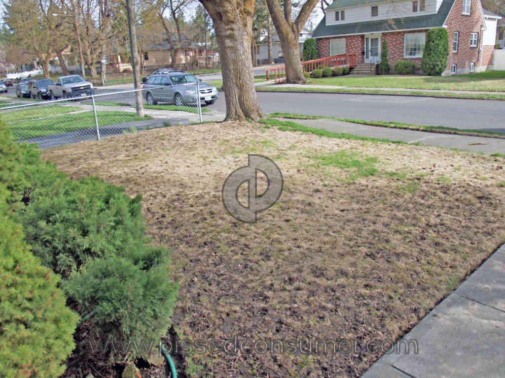 Scotts Lawn Service Killed My Lawn Jun 03 2015 Pissed