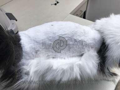 Petsmart Cat Grooming Service review 281630
