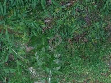 Trugreen Lawn Fertilization Service review 117975