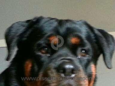 Big Dog Kennel Dog review 101451
