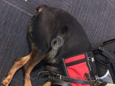Big Dog Kennel Rottweiler Dog review 248048