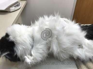 Petsmart Cat Grooming Service review 281628