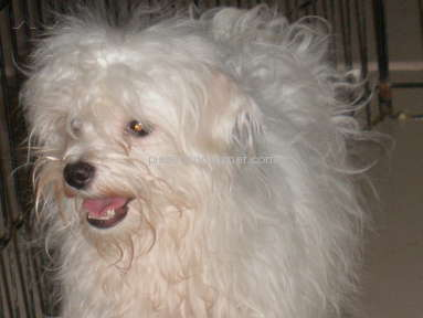 Puppyfind Animal Services review 58495