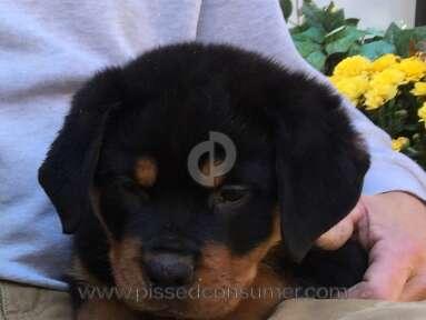 Big Dog Kennel Dog review 101453