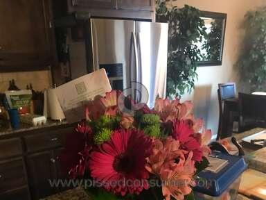 Avasflowers Azalea Plant review 211806