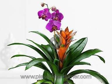 Proflowers Flowers / Florist review 61595