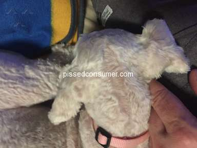 Petsmart Dog Grooming Service review 304734
