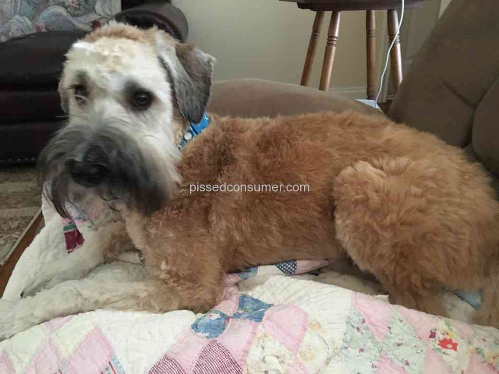 2 Spoiled Rotten Pet Groomers Reviews And Complaints Pissed Consumer