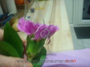 Prestige Flowers Flowers review 9859