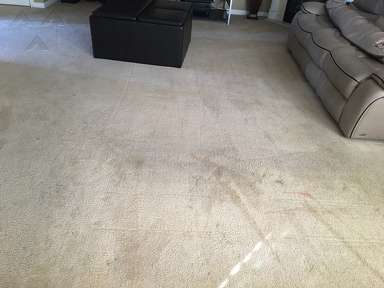 We Clean Carpets Carpet Cleaning Service review 142396