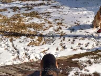 Von Wilhendorf - Dog Review from Country Club Hills, Illinois