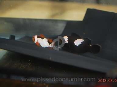 Clown Fish USA Shopping review 27261