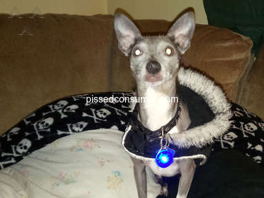 Petsmart Purina One Dog Food review 387690