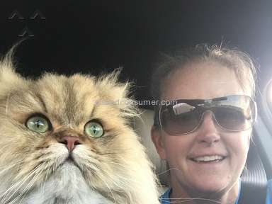 Christypaw Persians Persian Cat review 205086