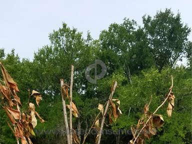 Ty Ty Nursery Kwanzan Cherry Tree review 301284