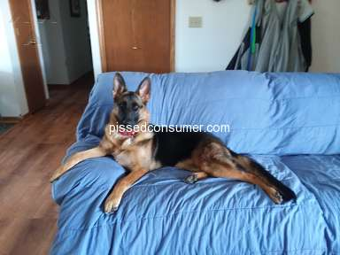 Von Der Stadtrand German Shepherds German Shepherd Dog review 311524