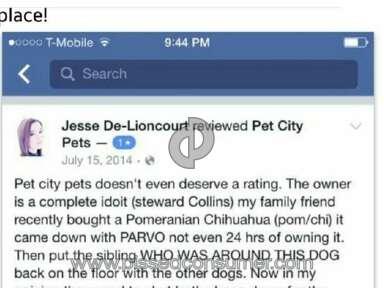 Pet City Pets Dog review 125765