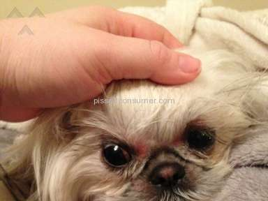 Petsmart Grooming Service review 35093