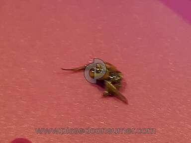 Clover Valley - Bug in my pb&j