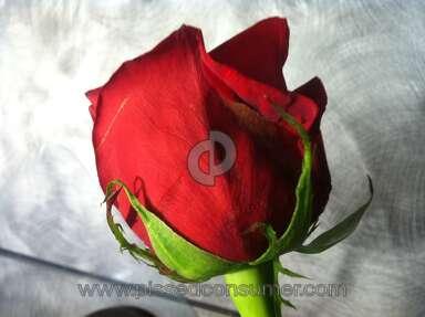 1800flowers Arrangement review 11127